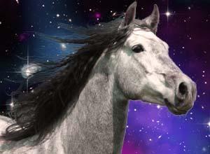 [Изображение: 2014_horse.jpg]