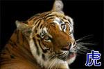 Китайский гороскоп: Тигр