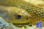 Китайский гороскоп: Змея