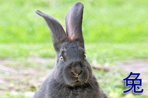 Китайский гороскоп: Кролик