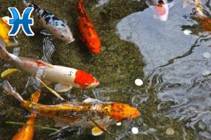 Рыбы: Гороскоп на завтра – 1001 ГОРОСКОП