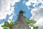 Гороскоп майя: Мировое Дерево